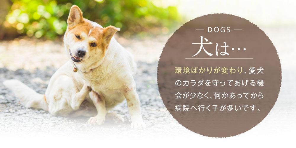 犬は環境ばかりが変わり、病院へ行く子が多いです。