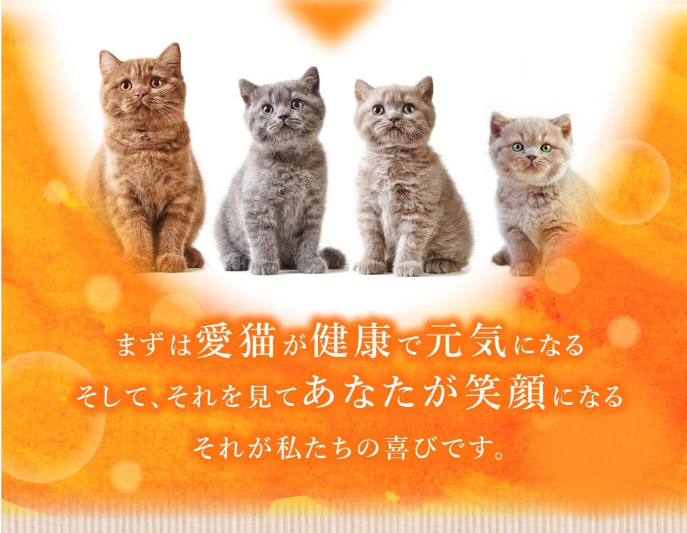 まずは愛猫が健康で元気になる