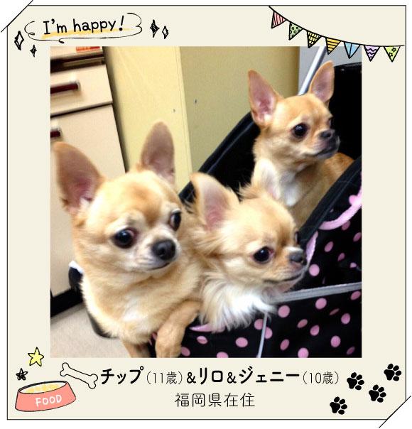 お兄ちゃんのチップ君と双子の妹のジェニーちゃんとリロちゃん!
