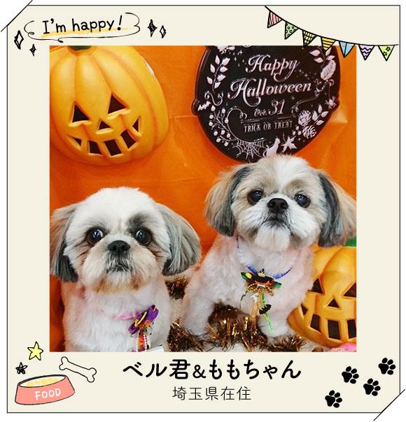 ハロウィンのかぼちゃと記念撮影!リボンもハロウィン仕様でおやつをおねだり?