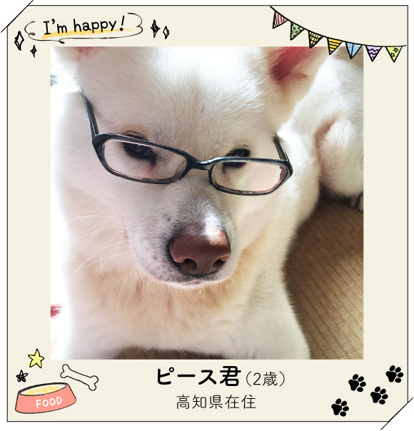 キリッとしたメガネ姿がとっても素敵なピース君!